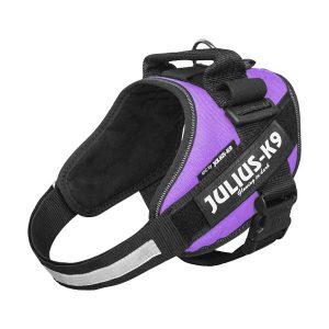 Julius K9 IDC powertuig paars baby 1 - maat4 met tekstlabels die gepersonaliseerd kunnen worden door K9-Label