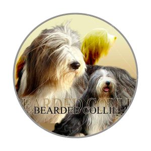 Bearded Collie afbeelding